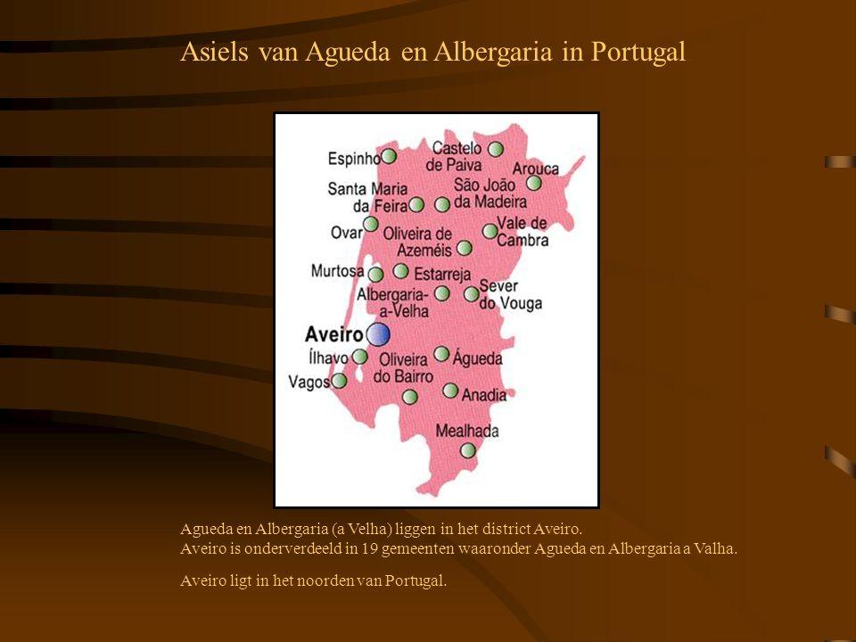 Asiels van Agueda en Albergaria in Portugal
