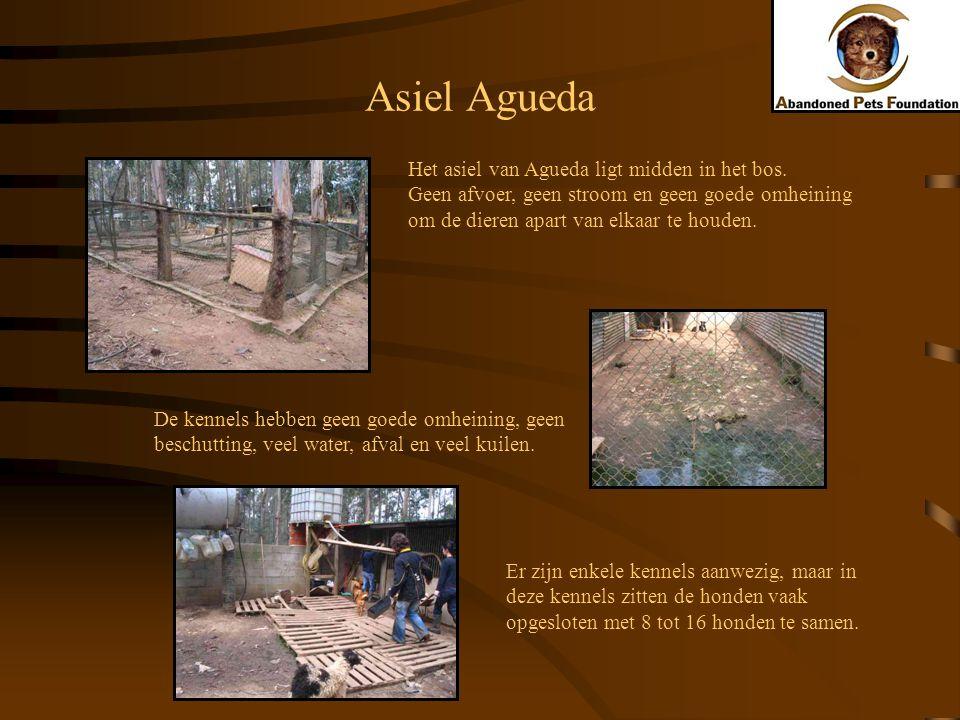 Asiel Agueda Het asiel van Agueda ligt midden in het bos.