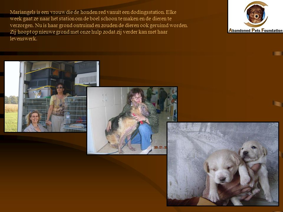 Mariangels is een vrouw die de honden red vanuit een dodingsstation