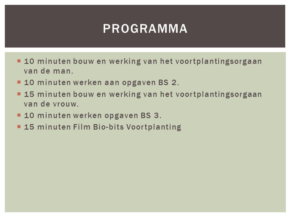 programma 10 minuten bouw en werking van het voortplantingsorgaan van de man. 10 minuten werken aan opgaven BS 2.