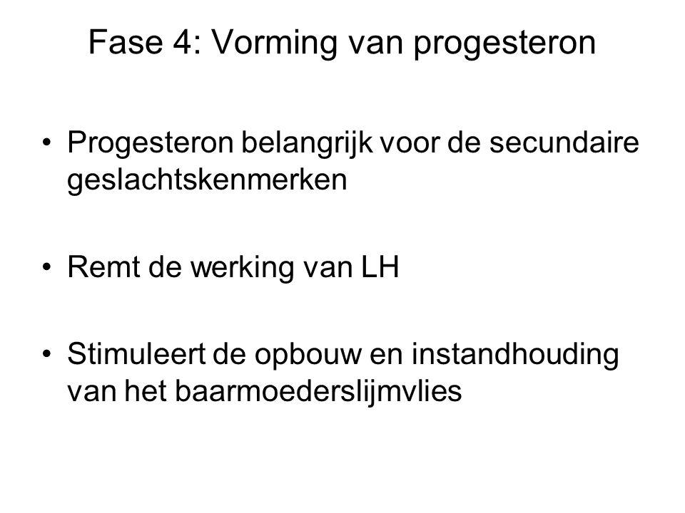 Fase 4: Vorming van progesteron