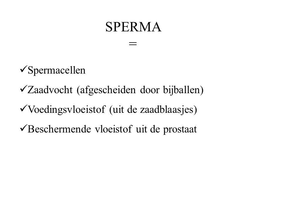 SPERMA = Spermacellen Zaadvocht (afgescheiden door bijballen)