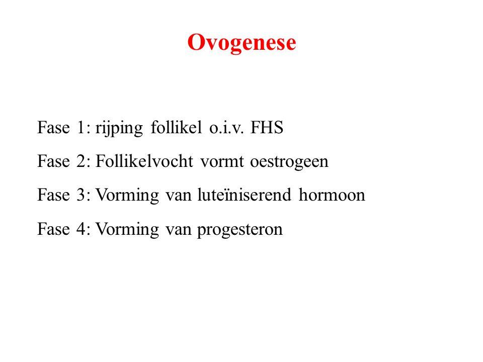 Ovogenese Fase 1: rijping follikel o.i.v. FHS