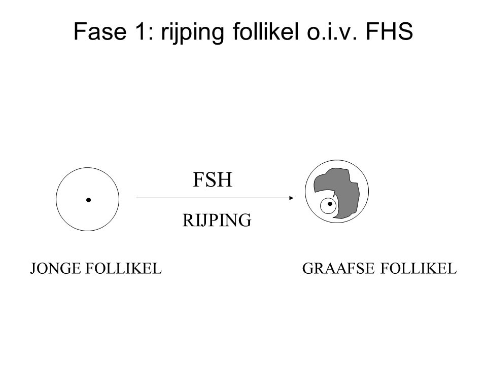 Fase 1: rijping follikel o.i.v. FHS