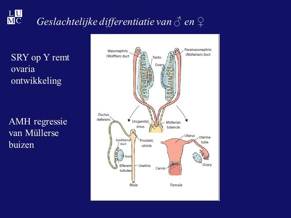Geslachtelijke differentiatie van ♂ en ♀
