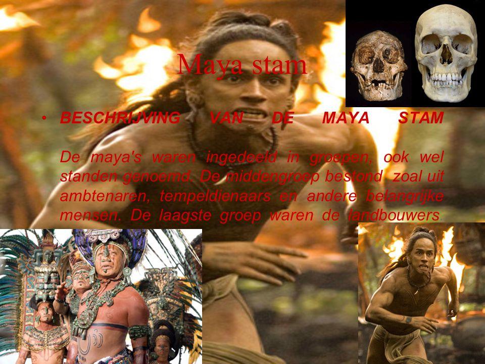 Maya stam