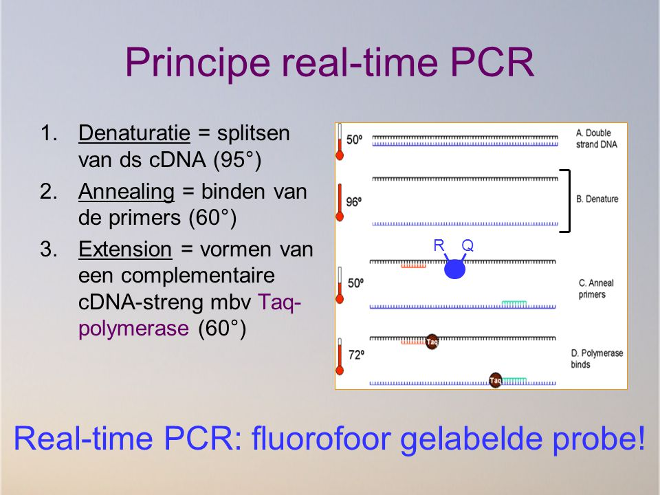 Principe real-time PCR