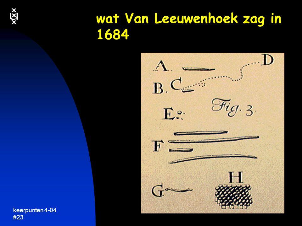 wat Van Leeuwenhoek zag in 1684