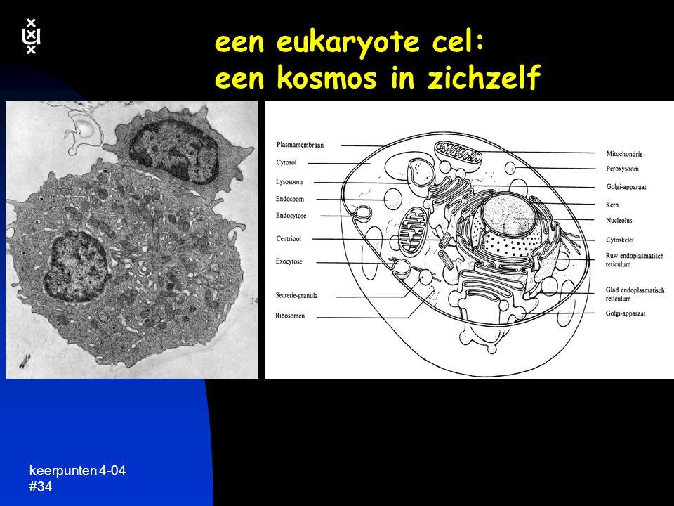 een eukaryote cel: een kosmos in zichzelf