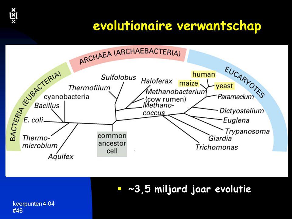 evolutionaire verwantschap