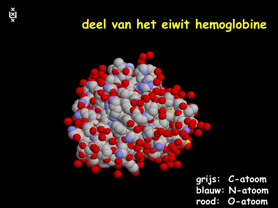 deel van het eiwit hemoglobine