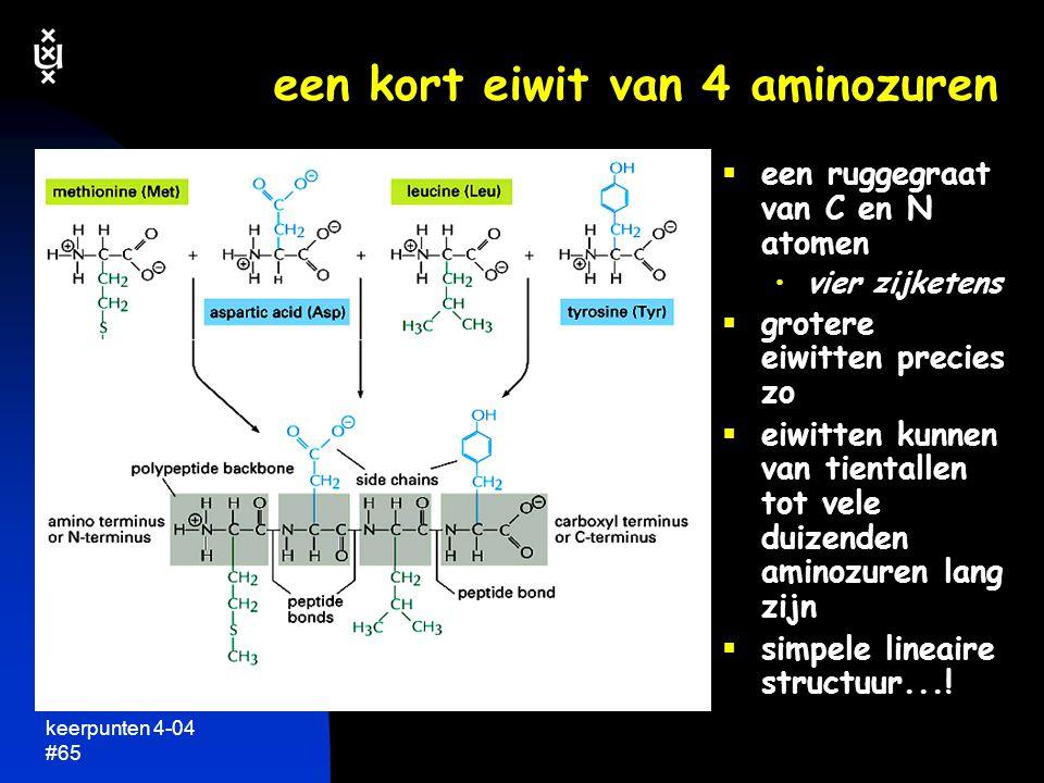 een kort eiwit van 4 aminozuren