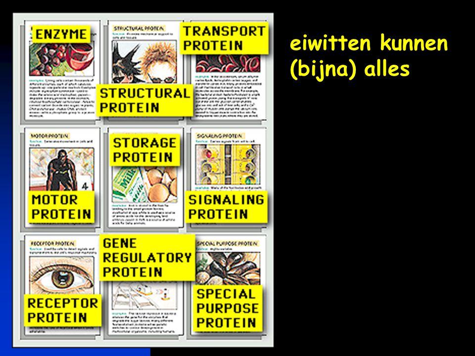 eiwitten kunnen (bijna) alles