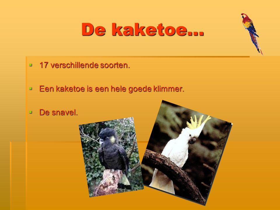De kaketoe… 17 verschillende soorten.