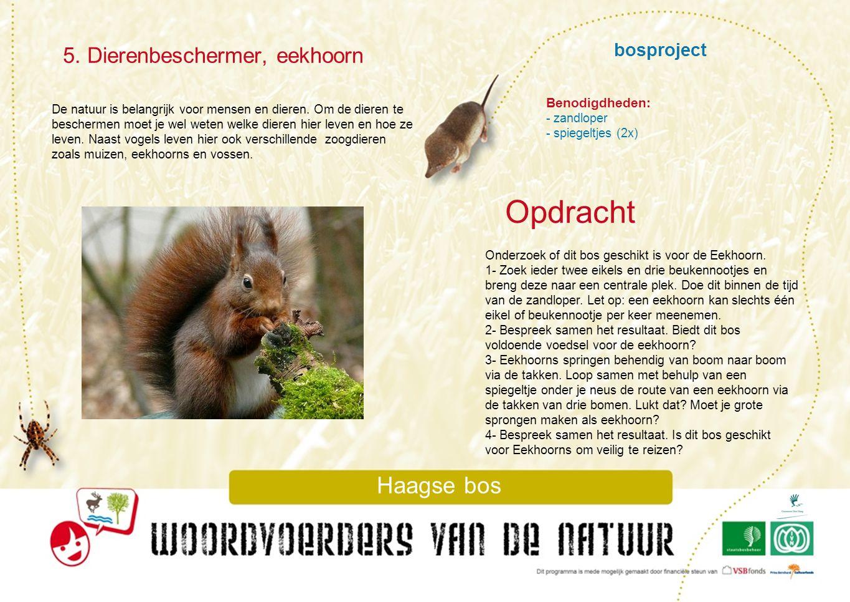 Opdracht 5. Dierenbeschermer, eekhoorn bosproject Haagse bos