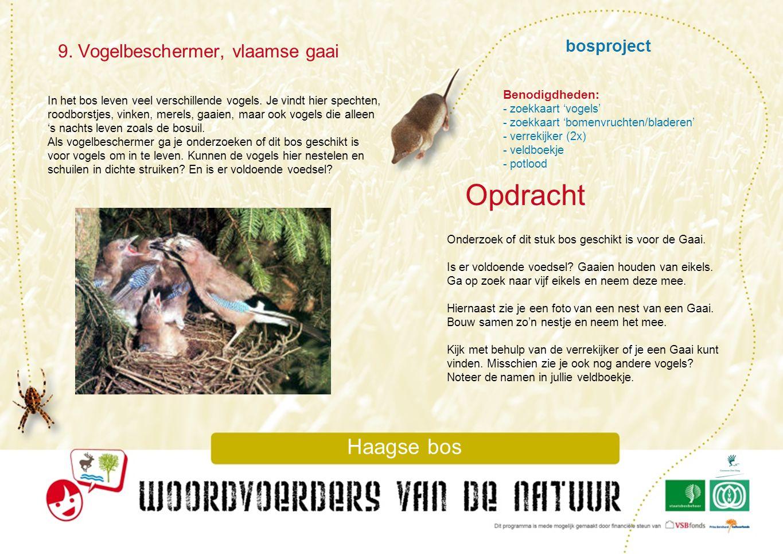 Opdracht 9. Vogelbeschermer, vlaamse gaai bosproject Haagse bos