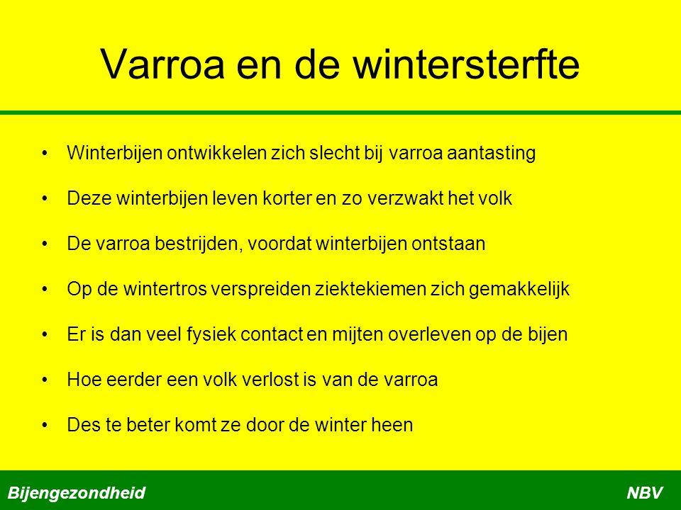 Varroa en de wintersterfte
