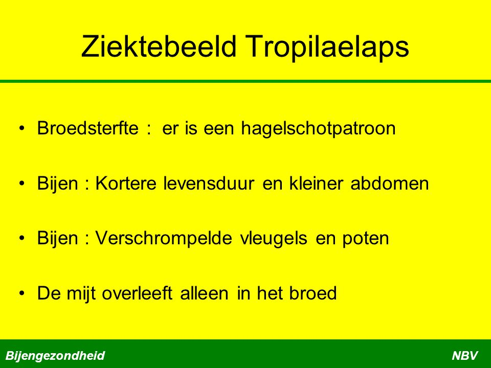 Ziektebeeld Tropilaelaps