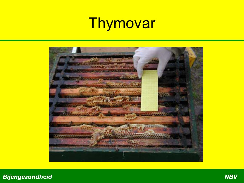 Thymovar Bijengezondheid NBV