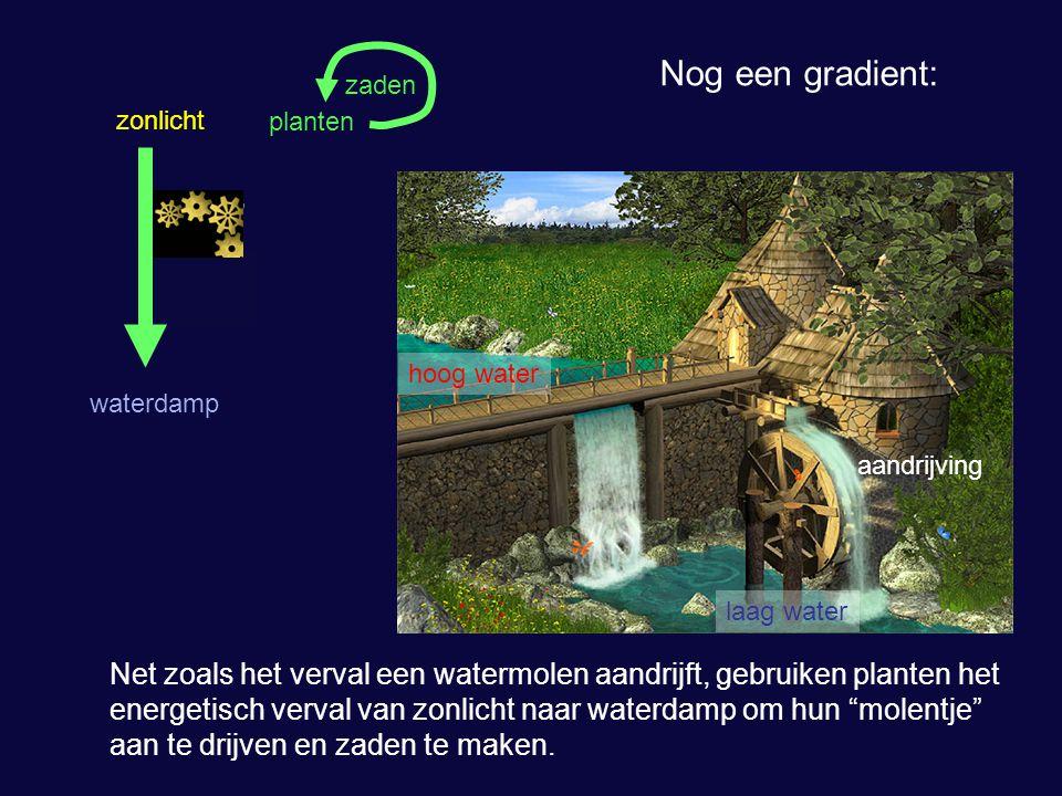 Nog een gradient: zaden. zonlicht. planten. hoog water. waterdamp. aandrijving. laag water.
