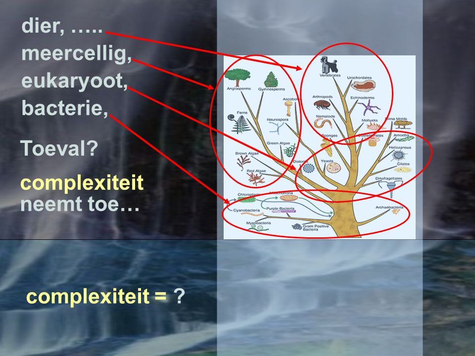 dier, ….. meercellig, eukaryoot, bacterie, Toeval complexiteit neemt toe… complexiteit =