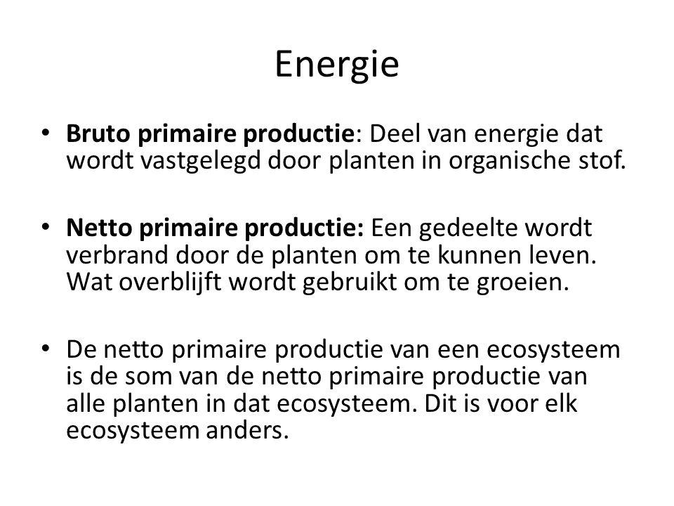 Energie Bruto primaire productie: Deel van energie dat wordt vastgelegd door planten in organische stof.