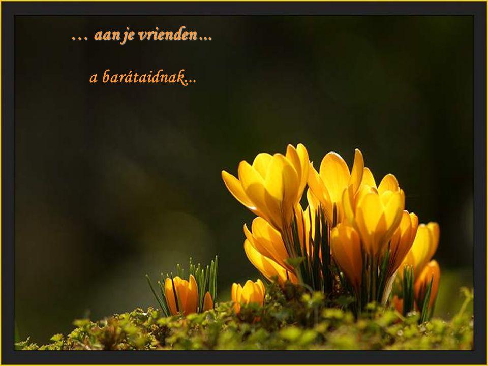 … aan je vrienden ... a barátaidnak...