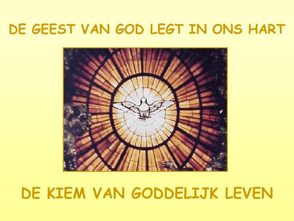 DE GEEST VAN GOD LEGT IN ONS HART DE KIEM VAN GODDELIJK LEVEN