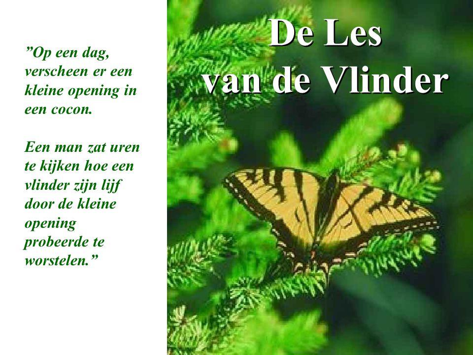 De Les van de Vlinder Op een dag, verscheen er een kleine opening in een cocon.