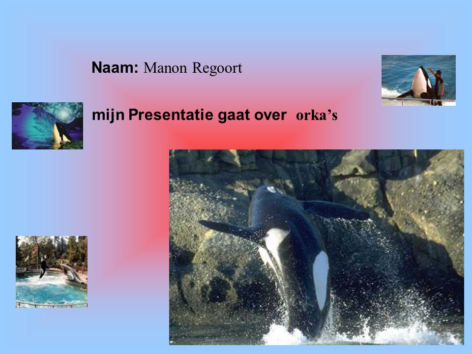 mijn Presentatie gaat over orka's