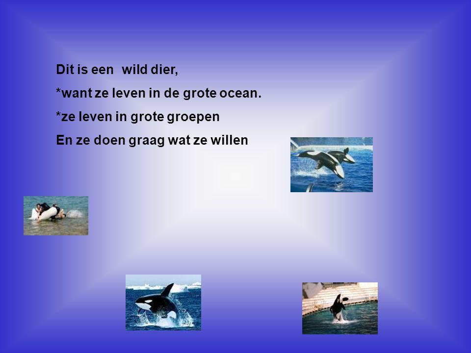 *want ze leven in de grote ocean. *ze leven in grote groepen