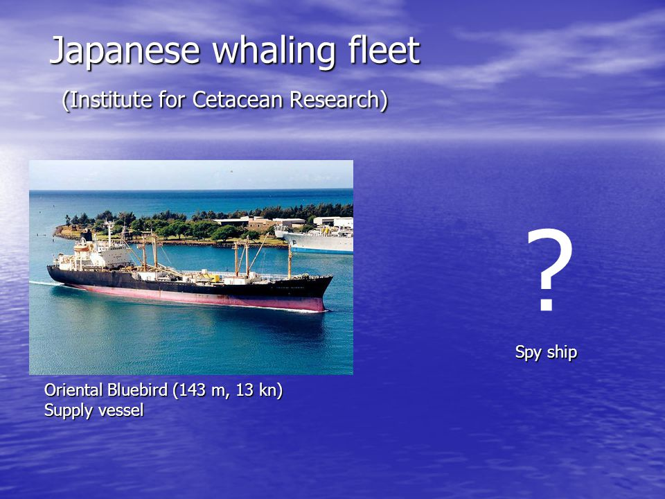 Japanese whaling fleet (Institute for Cetacean Research)