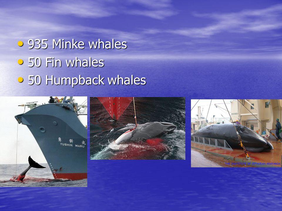 935 Minke whales 50 Fin whales 50 Humpback whales