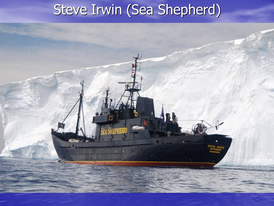 Steve Irwin (Sea Shepherd)