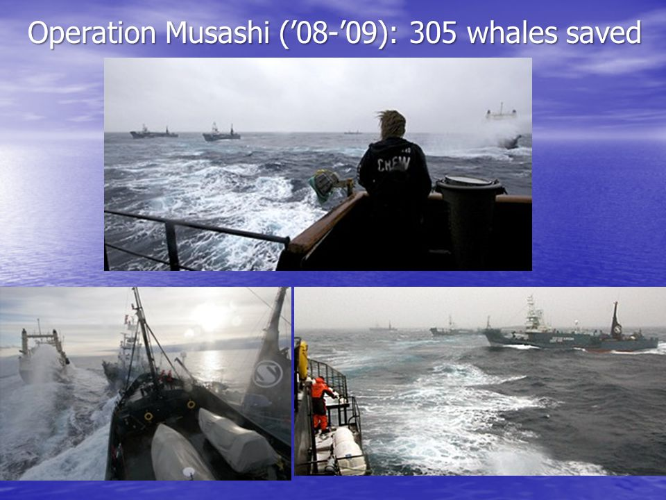 Operation Musashi ('08-'09): 305 whales saved