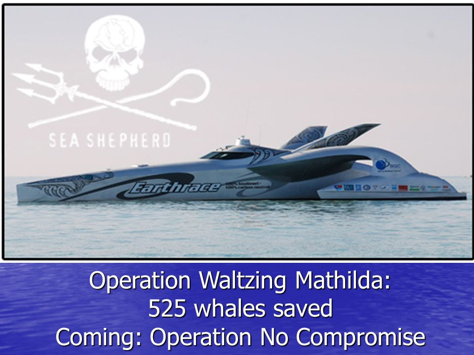 Operation Waltzing Mathilda: 525 whales saved