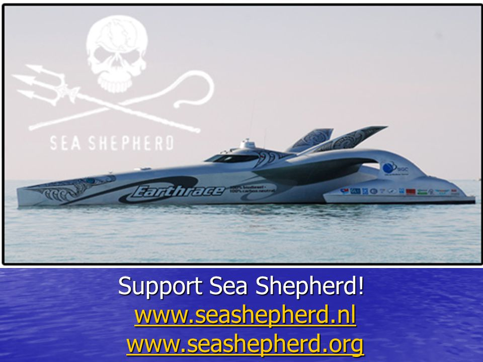 Support Sea Shepherd! www.seashepherd.nl www.seashepherd.org