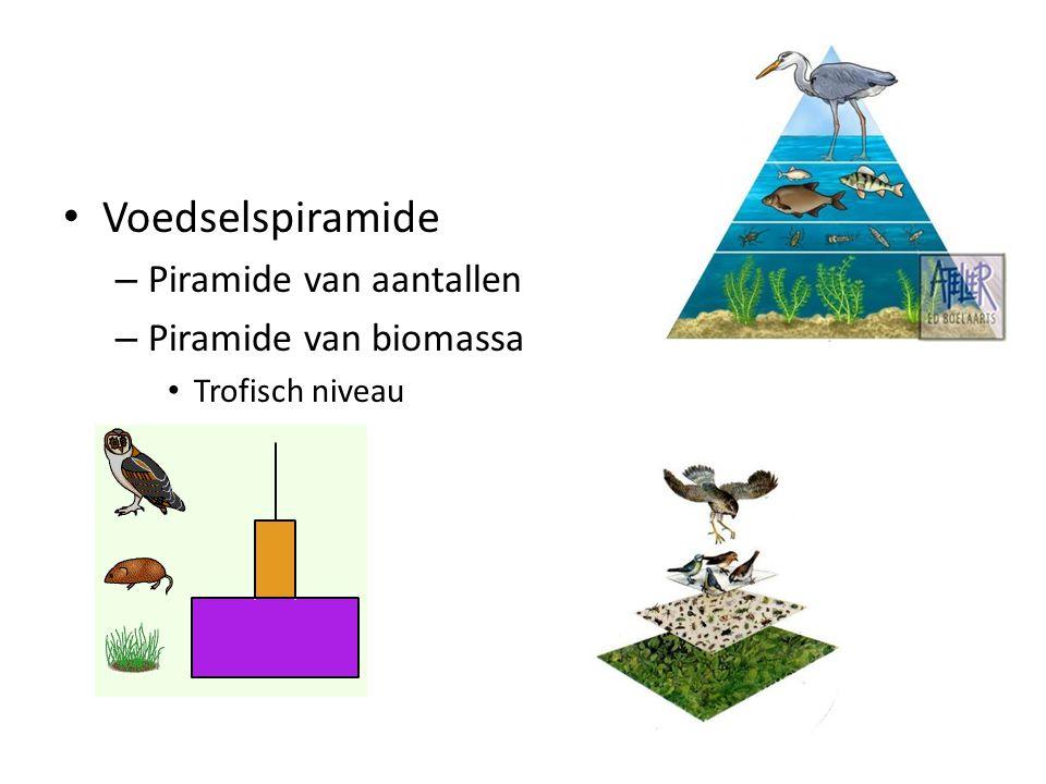 Voedselspiramide Piramide van aantallen Piramide van biomassa