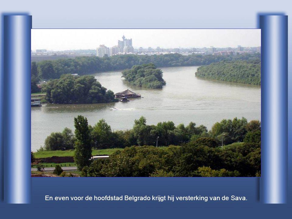 En even voor de hoofdstad Belgrado krijgt hij versterking van de Sava.