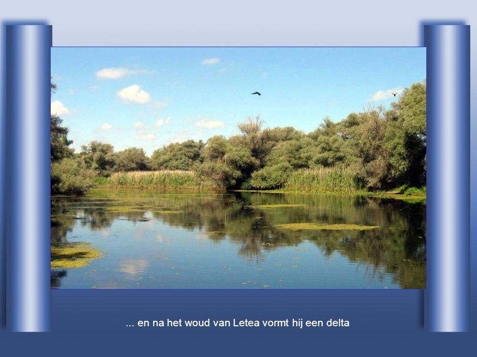 ... en na het woud van Letea vormt hij een delta