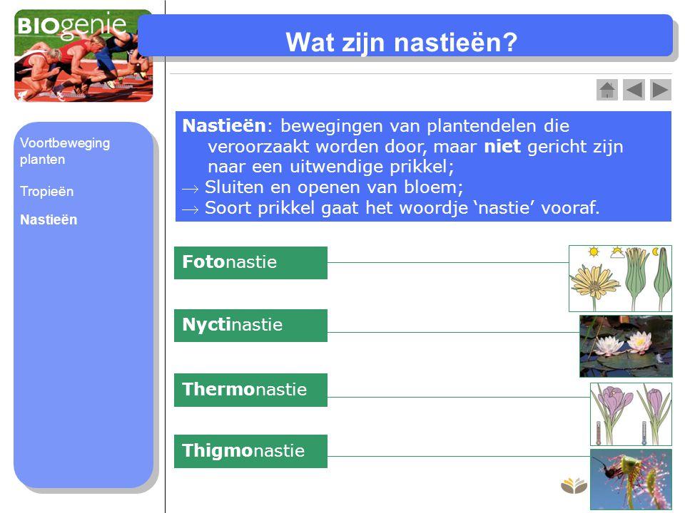 Wat zijn nastieën Nastieën: bewegingen van plantendelen die veroorzaakt worden door, maar niet gericht zijn naar een uitwendige prikkel;