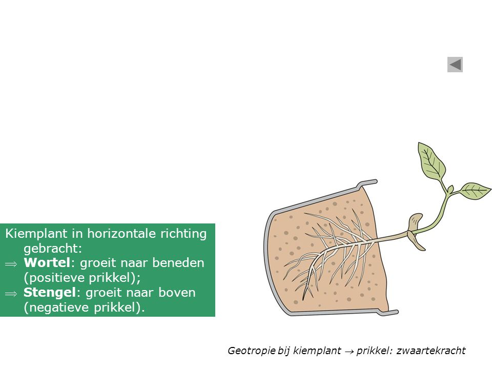 Kiemplant in horizontale richting gebracht: