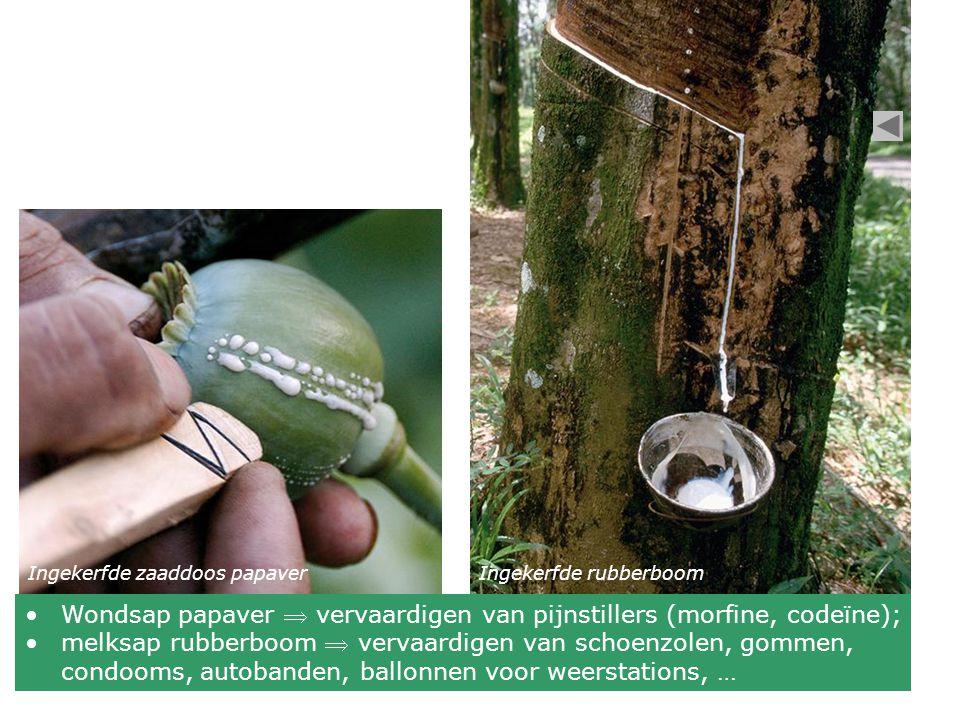 Wondsap papaver  vervaardigen van pijnstillers (morfine, codeïne);