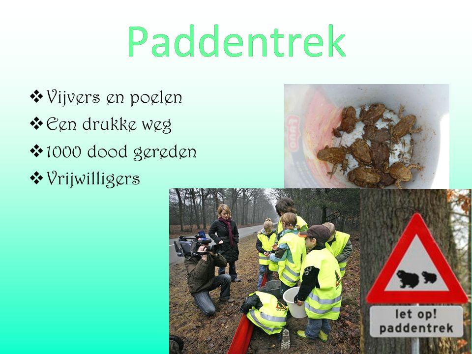 Paddentrek Vijvers en poelen Een drukke weg 1000 dood gereden