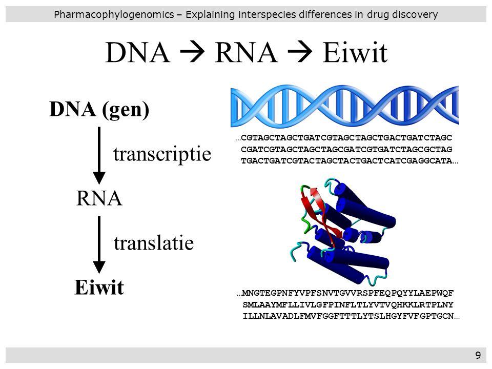 DNA  RNA  Eiwit DNA (gen) transcriptie RNA translatie Eiwit