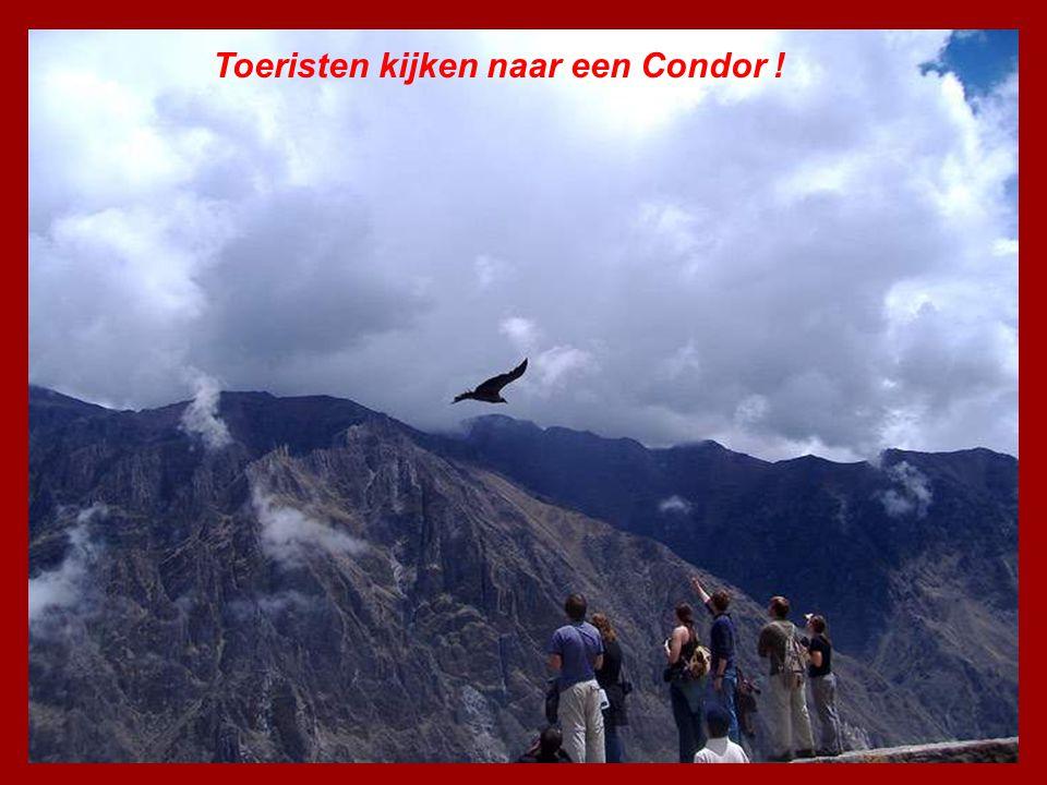 Toeristen kijken naar een Condor !