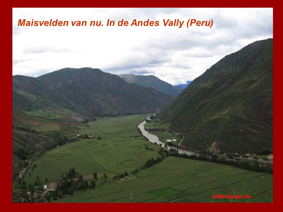 Maisvelden van nu. In de Andes Vally (Peru)