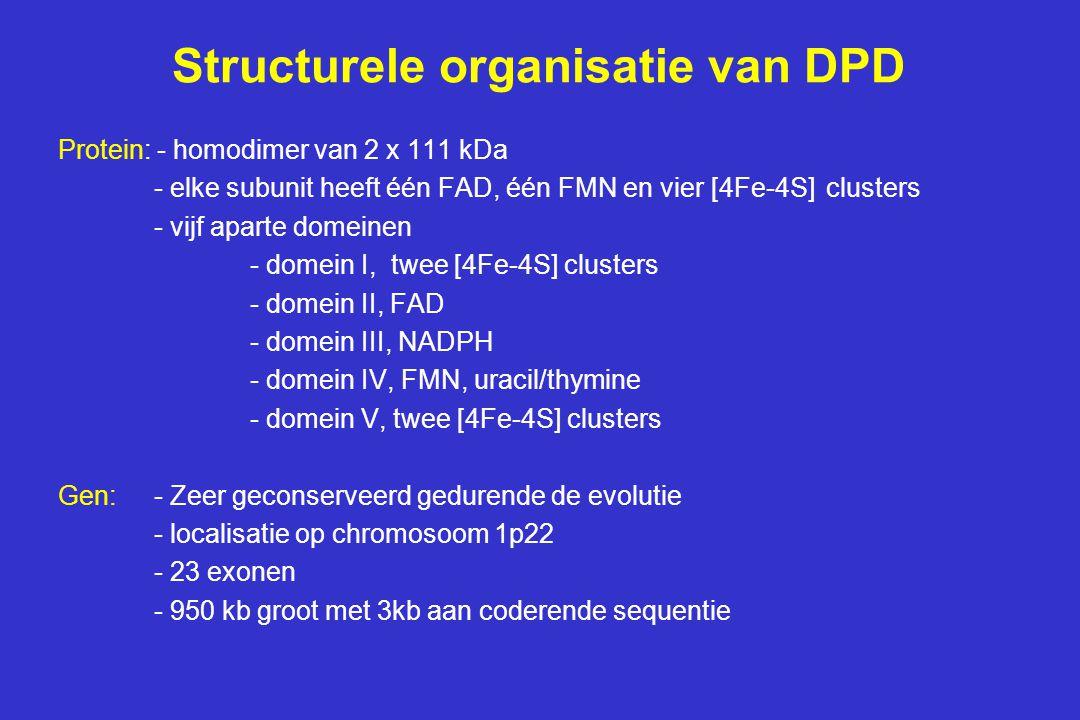 Structurele organisatie van DPD