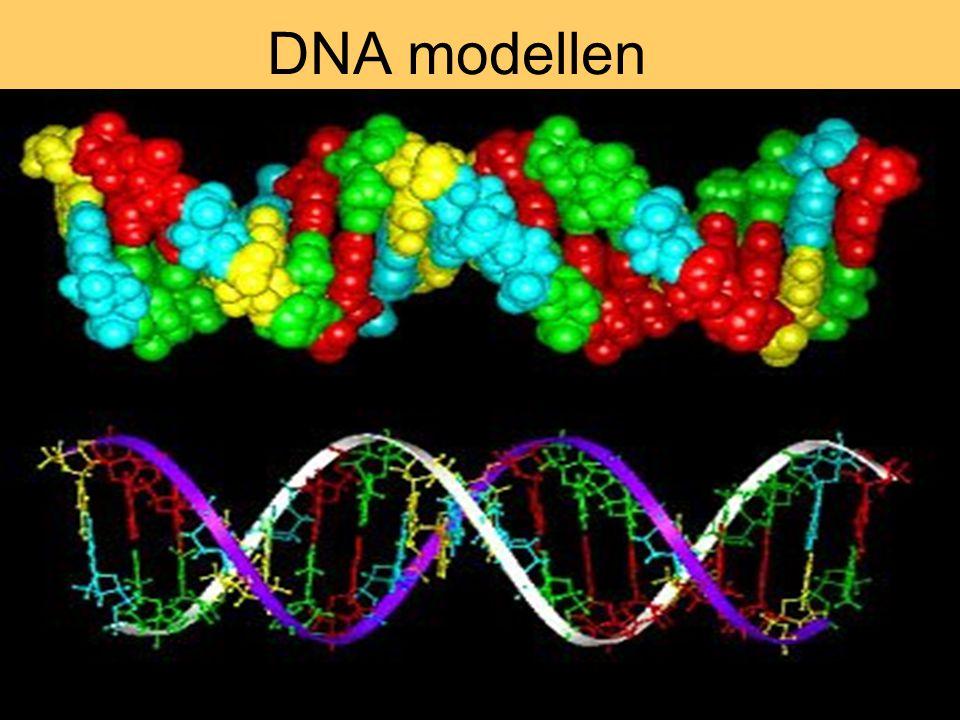DNA modellen