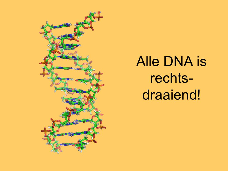 Alle DNA is rechts-draaiend!